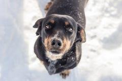 Un perro negro de la calle Imagen de archivo libre de regalías