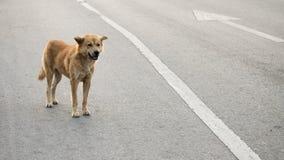 Un perro perdido Fotografía de archivo
