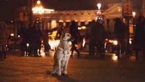 Un perro perdido en la ciudad Noche en la calle imagenes de archivo