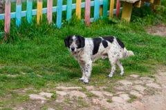 Un perro perdido que se coloca en el medio de una carretera Imagenes de archivo