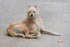 Un perro perdido triste es color marrón que se sienta solamente con su cabeza abajo Fotos de archivo libres de regalías