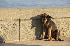 Un perro perdido triste es color marrón que se sienta solamente con su cabeza abajo Imagen de archivo libre de regalías