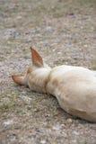 Un perro que coloca en la tierra Imagenes de archivo