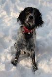 Un perro que congela y que juega en una nieve Imagen de archivo libre de regalías
