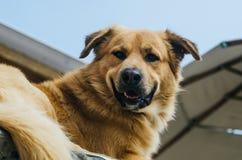 Un perro que disfruta del aire libre en un día de verano hermoso imágenes de archivo libres de regalías
