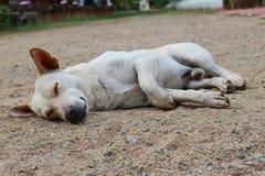 Un perro que duerme en la tierra Fotos de archivo