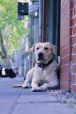 Un perro que espera Fotografía de archivo