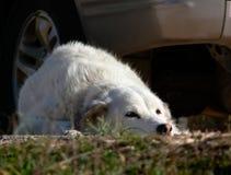 Un perro que espera su amo. Imagen de archivo