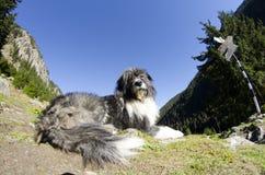 Un perro que guarda en la montaña Imagen de archivo libre de regalías