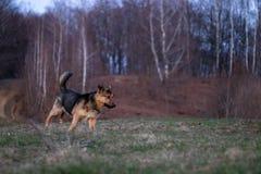 Un perro que juega alrededor imagenes de archivo