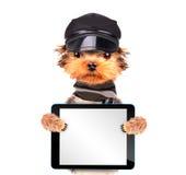 Un perro que lleva un casquillo Fotografía de archivo