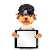 Un perro que lleva un casquillo Imagen de archivo
