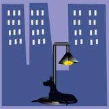 Un perro que pone cerca de la lámpara de calle Imagenes de archivo