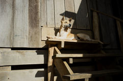 Un perro que pone delante de una casa del pueblo Imagen de archivo libre de regalías
