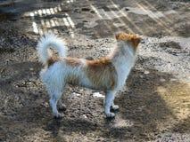 Un perro que se coloca en el camino rural Foto de archivo
