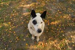 Un perro que se incorpora y que mira Imagenes de archivo