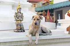 Un perro que se sienta al lado de una estatua de Buda grande Fotografía de archivo libre de regalías