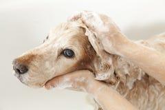 Cuarto de baño a un perro Imagen de archivo