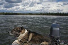 Un perro que viaja rio abajo en un barco de motor Fotos de archivo libres de regalías