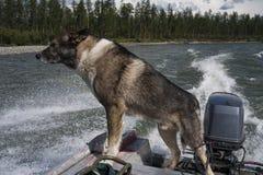 Un perro que viaja rio abajo en un barco de motor Foto de archivo libre de regalías