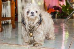 Un perro relleno Fotos de archivo