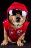 Perro y piel Foto de archivo libre de regalías