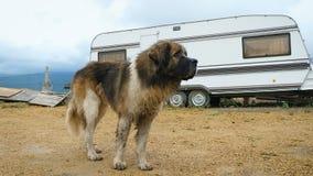 Un perro se está colocando al lado de una caravana almacen de metraje de vídeo