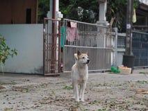Un perro sin el dueño que mira algo Fotos de archivo