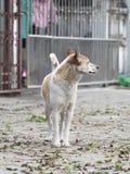 Un perro sin el dueño que mira algo Imágenes de archivo libres de regalías