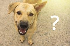 Un perro sin hogar con un signo de interrogación imagenes de archivo
