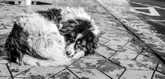 Un perro sin hogar que intenta calentar Imagen de archivo libre de regalías