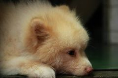 Un perro soñoliento fotografía de archivo libre de regalías