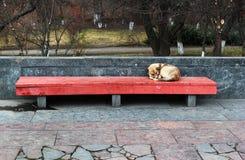 Un perro solitario el dormir en la calle Fotografía de archivo libre de regalías