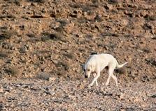 Un perro solo. Fotos de archivo libres de regalías