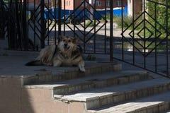 Un perro solo miente cerca de la entrada a la casa vieja ilustración del vector