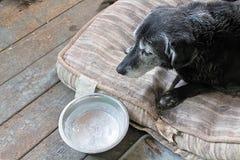 Un perro triste con un cuenco congelado del agua fotos de archivo libres de regalías