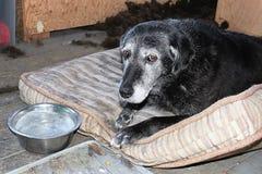 Un perro triste con un cuenco congelado del agua imágenes de archivo libres de regalías