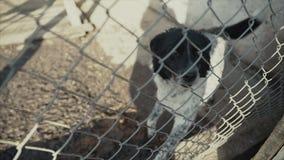 Un perro triste en su jaula en un refugio para animales que espera para ser adoptado metrajes