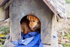 Un perro triste en una caseta de perro vieja Imagenes de archivo