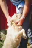 Un perro vuela a la persona foto de archivo libre de regalías