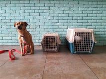 Un perro y dos gatos que visitan una clínica veterinaria imágenes de archivo libres de regalías