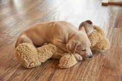Un perro y una muñeca Imagen de archivo libre de regalías