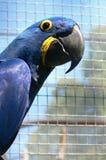 Un perroquet Photos stock