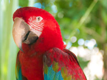 Un perroquet coloré Image libre de droits