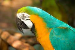 Un perroquet coloré Photographie stock