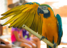 Un perroquet coloré Images libres de droits