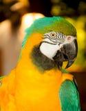 Un perroquet coloré Photos stock