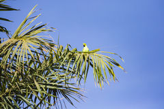 Un perroquet dans un arbre photographie stock