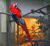 Un perroquet gratuit photo libre de droits