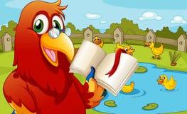 Un perroquet près de l'étang montrant un livre vide Photo stock